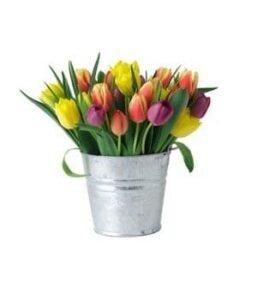 Cubeta-de-tulipanes
