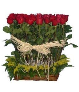 Cultivo-de-rosas