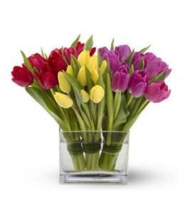 Tulipanes-tricolor